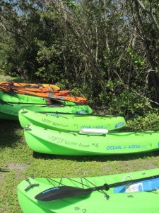 kayaks-bartlett-pond-mangroves-classick-2011-225x300