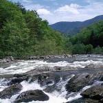 Asheville creek